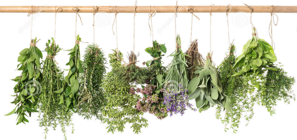 Herbs for Babies and Moms
