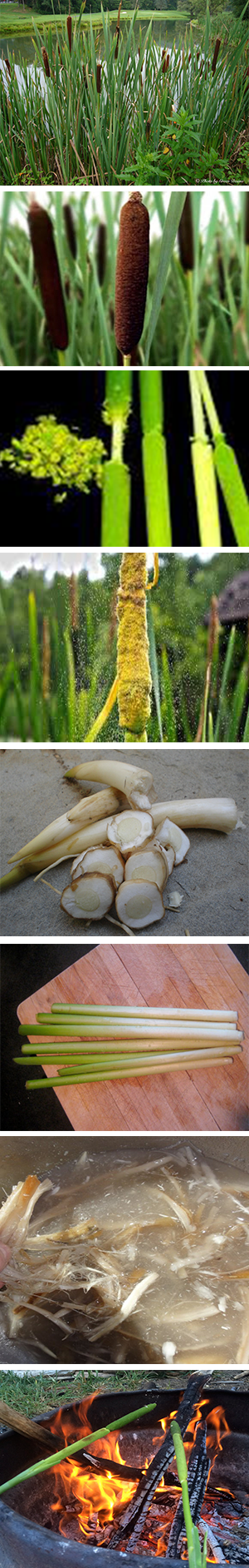 Blessingway Herbals Native Foods
